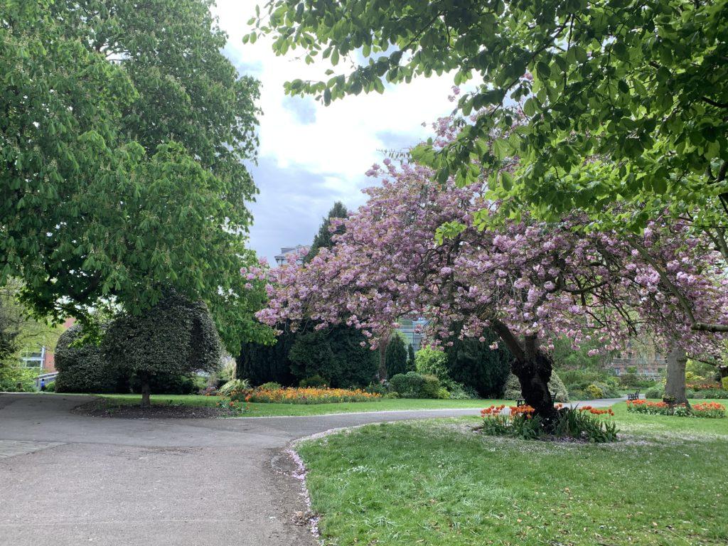 Castle Gardens Leicester, Blossom