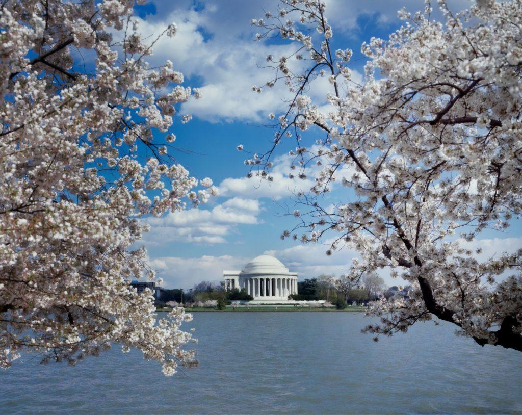 White House Jefferson Memorial Blossom